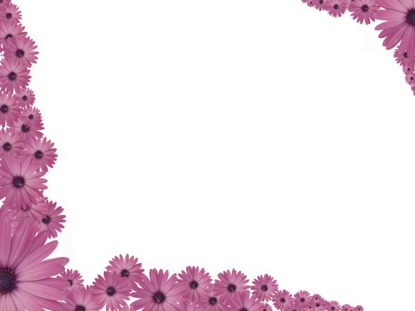 Bright Floral Corner Border in Pink color, Rectangular perfect for Powerpoint