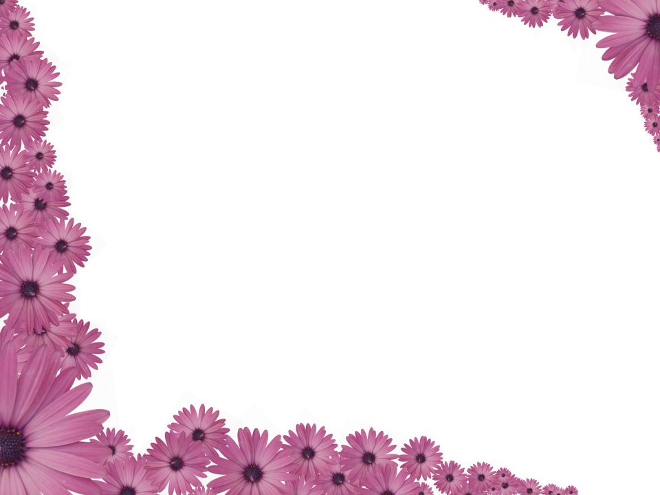 Pink Flowers Sprinkled at corners of Rectangular Transparent Background Border